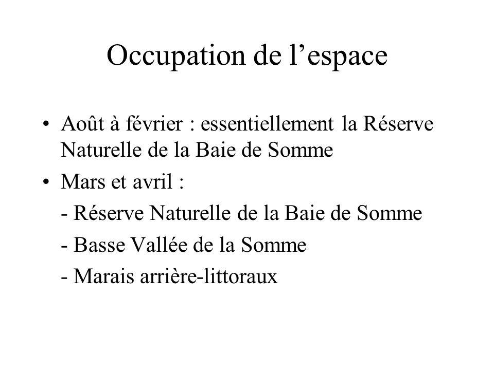 Occupation de l'espace •Août à février : essentiellement la Réserve Naturelle de la Baie de Somme •Mars et avril : - Réserve Naturelle de la Baie de Somme - Basse Vallée de la Somme - Marais arrière-littoraux