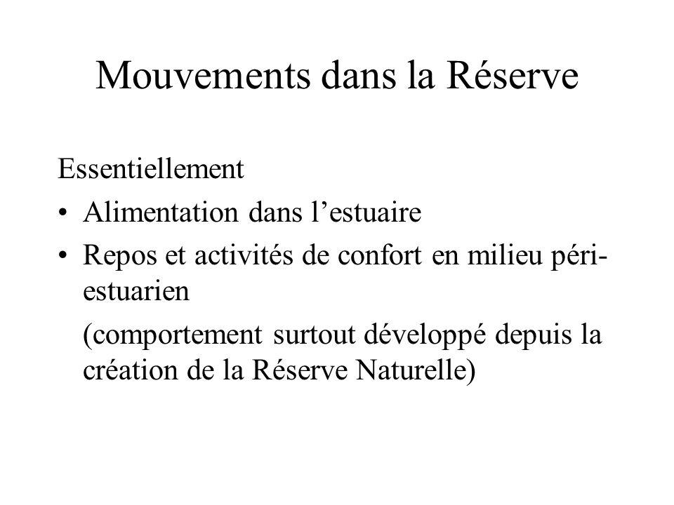 Mouvements dans la Réserve Essentiellement •Alimentation dans l'estuaire •Repos et activités de confort en milieu péri- estuarien (comportement surtout développé depuis la création de la Réserve Naturelle)