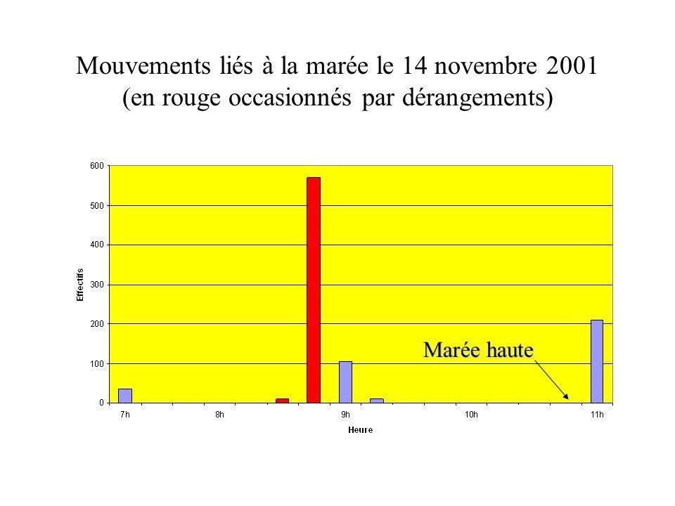 Mouvements liés à la marée le 14 novembre 2001 (en rouge occasionnés par dérangements) Marée haute