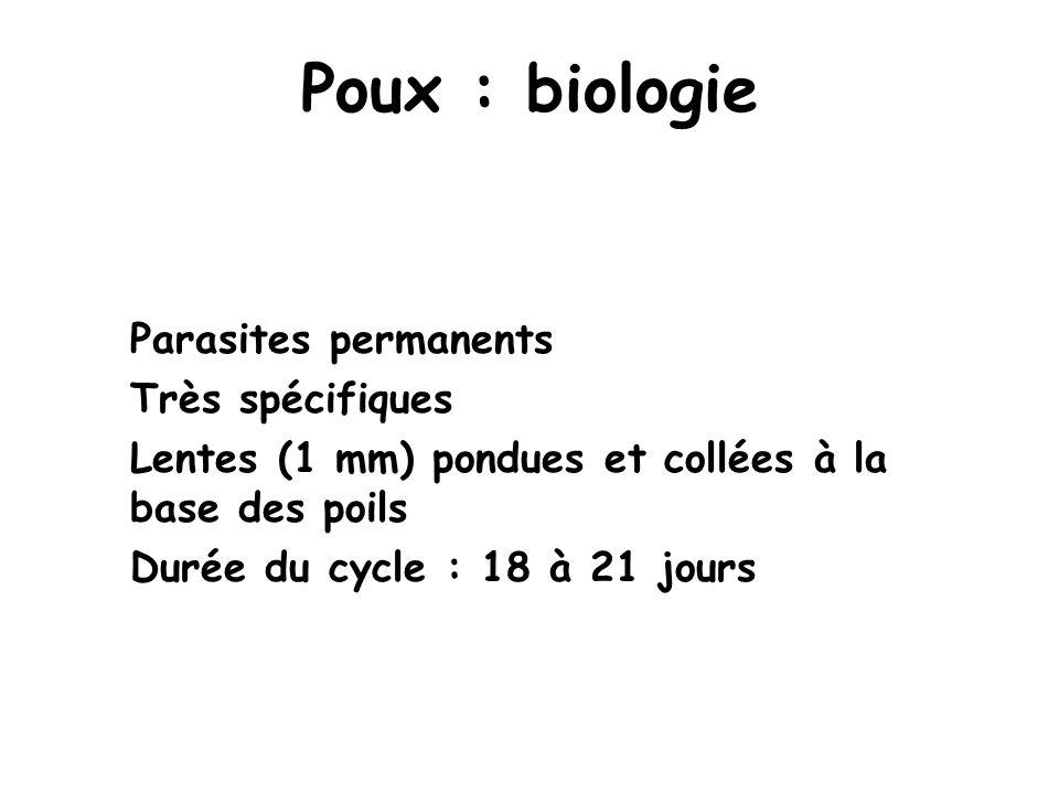 Poux : biologie Parasites permanents Très spécifiques Lentes (1 mm) pondues et collées à la base des poils Durée du cycle : 18 à 21 jours