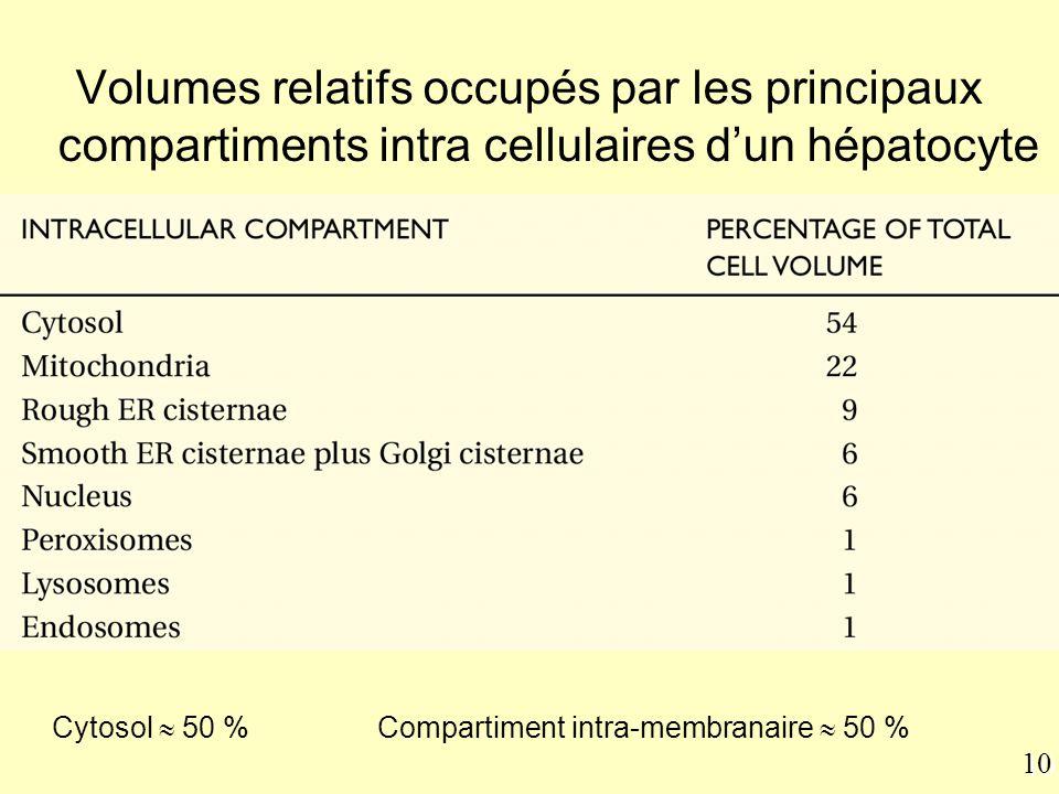 10 Table 12-1 Volumes relatifs occupés par les principaux compartiments intra cellulaires d'un hépatocyte Cytosol  50 % Compartiment intra-membranair