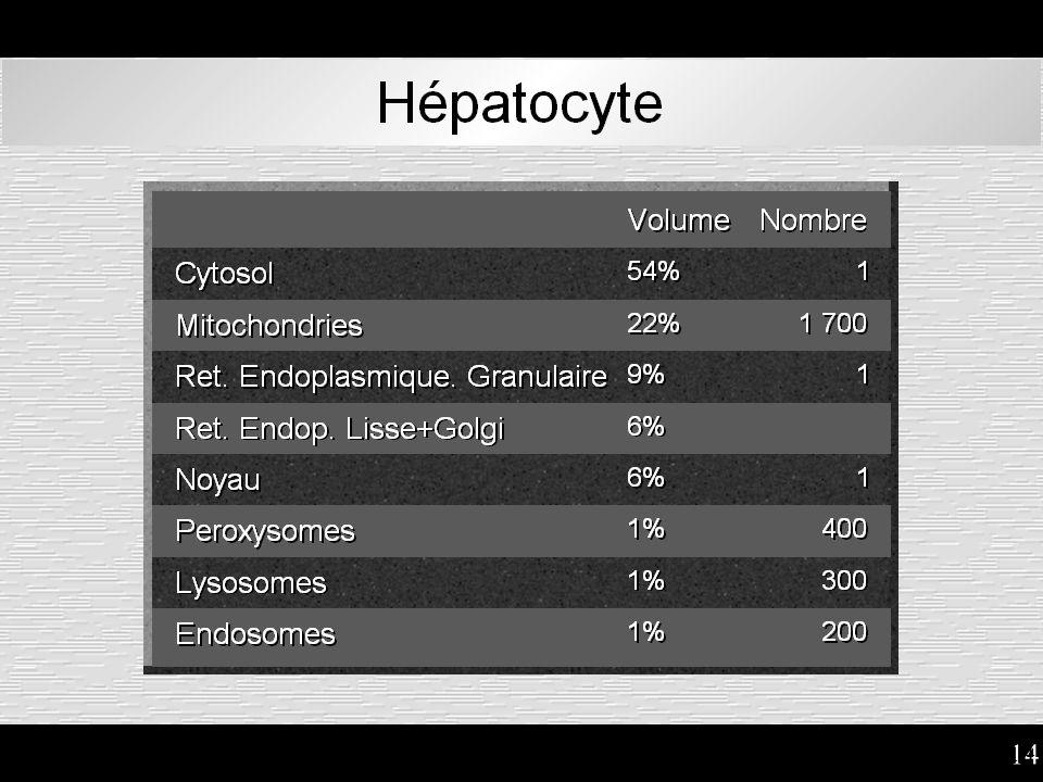 14 Hépatocyte : surfaces relatives des organites