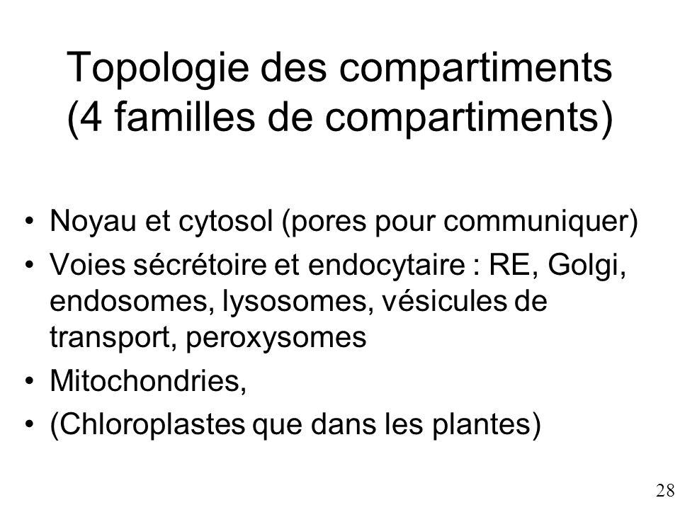 28 Topologie des compartiments (4 familles de compartiments) •Noyau et cytosol (pores pour communiquer) •Voies sécrétoire et endocytaire : RE, Golgi,