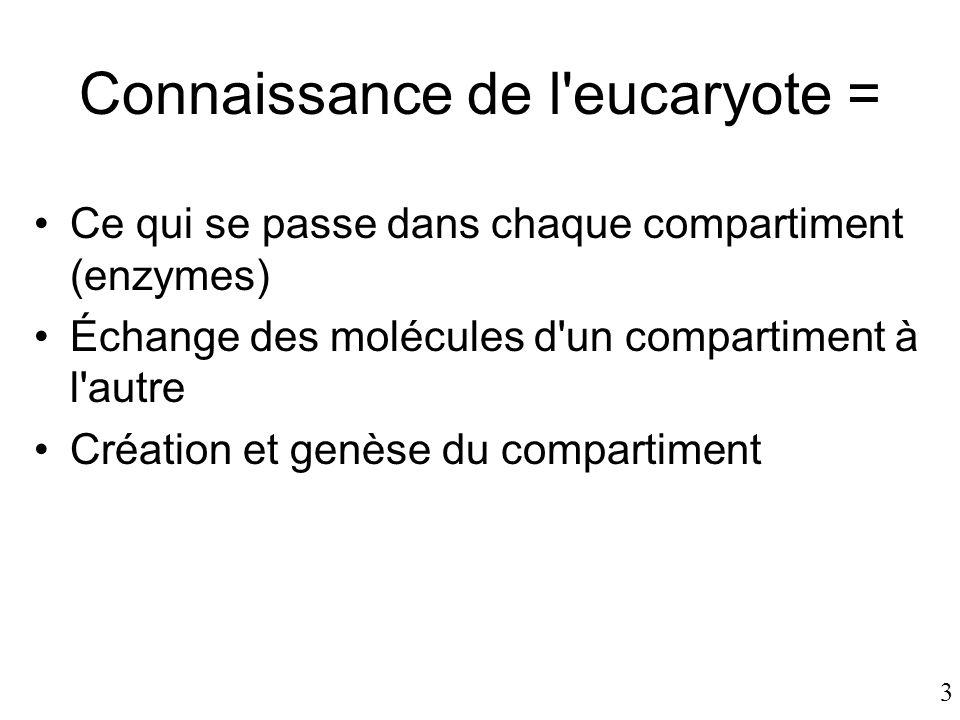 3 Connaissance de l'eucaryote = •Ce qui se passe dans chaque compartiment (enzymes) •Échange des molécules d'un compartiment à l'autre •Création et ge