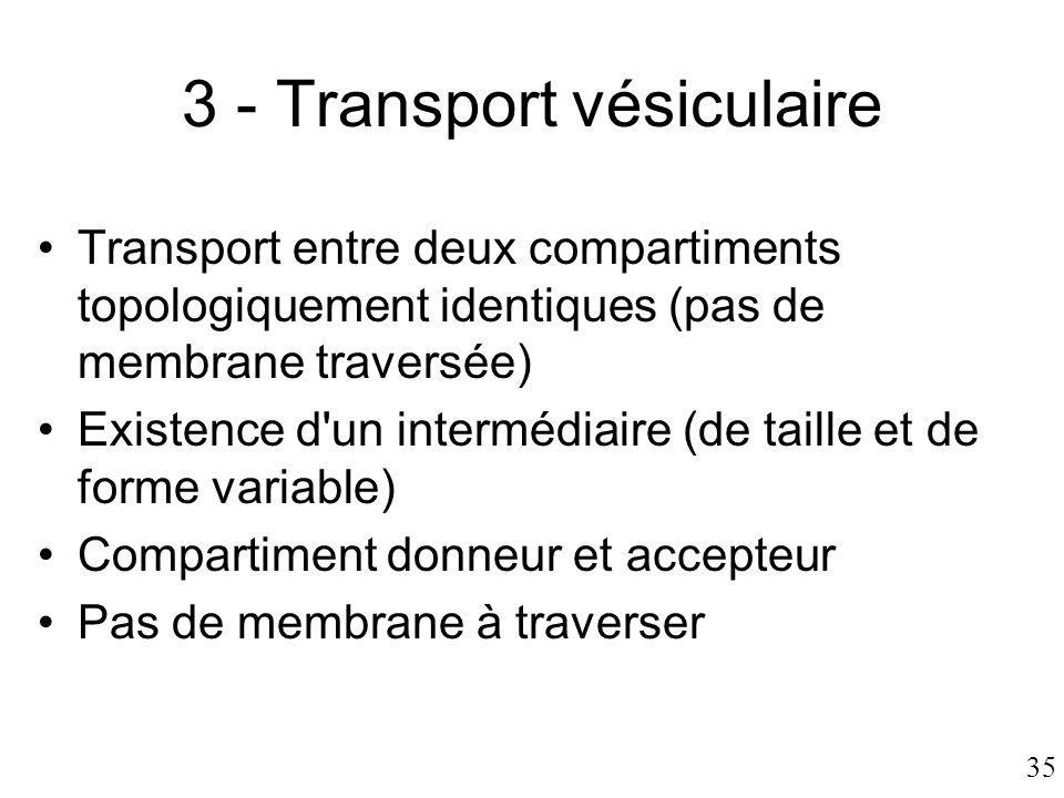 35 3 - Transport vésiculaire •Transport entre deux compartiments topologiquement identiques (pas de membrane traversée) •Existence d'un intermédiaire