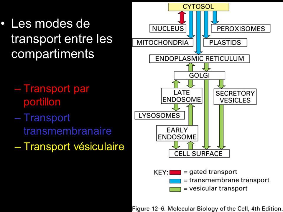 36 Fig 12-6 •Les modes de transport entre les compartiments –Transport par portillon –Transport transmembranaire –Transport vésiculaire
