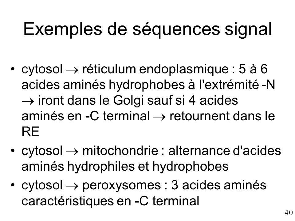 40 Exemples de séquences signal •cytosol  réticulum endoplasmique : 5 à 6 acides aminés hydrophobes à l'extrémité -N  iront dans le Golgi sauf si 4