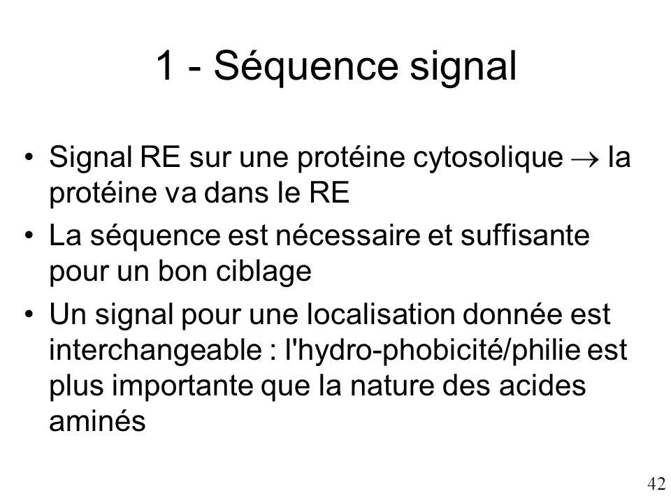 42 1 - Séquence signal •Signal RE sur une protéine cytosolique  la protéine va dans le RE •La séquence est nécessaire et suffisante pour un bon cibla