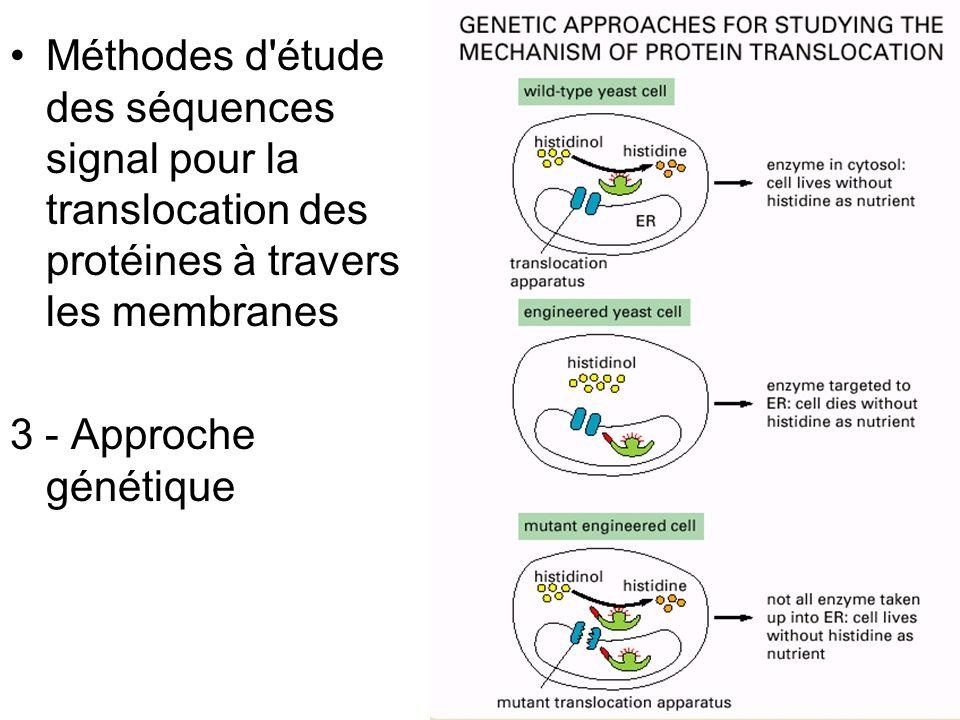 45 Panel 12-1C •Méthodes d'étude des séquences signal pour la translocation des protéines à travers les membranes 3 - Approche génétique