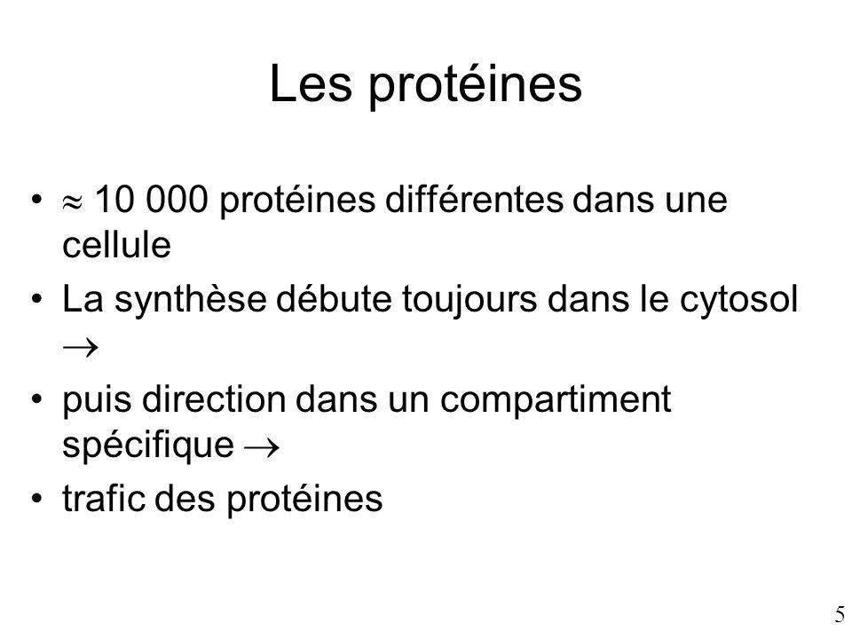 5 Les protéines •  10 000 protéines différentes dans une cellule •La synthèse débute toujours dans le cytosol  •puis direction dans un compartiment