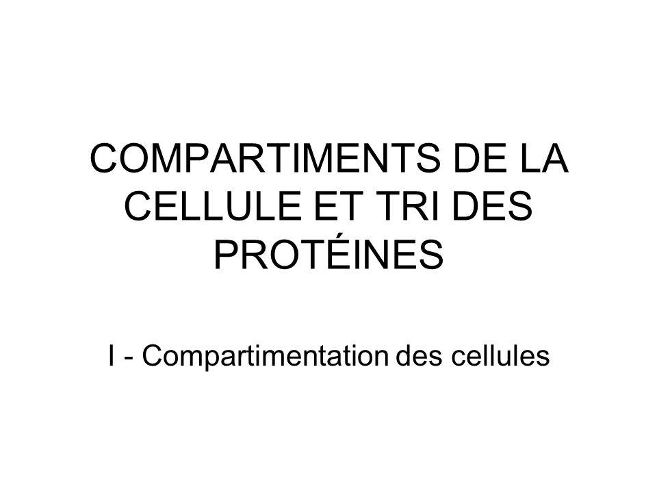 COMPARTIMENTS DE LA CELLULE ET TRI DES PROTÉINES I - Compartimentation des cellules