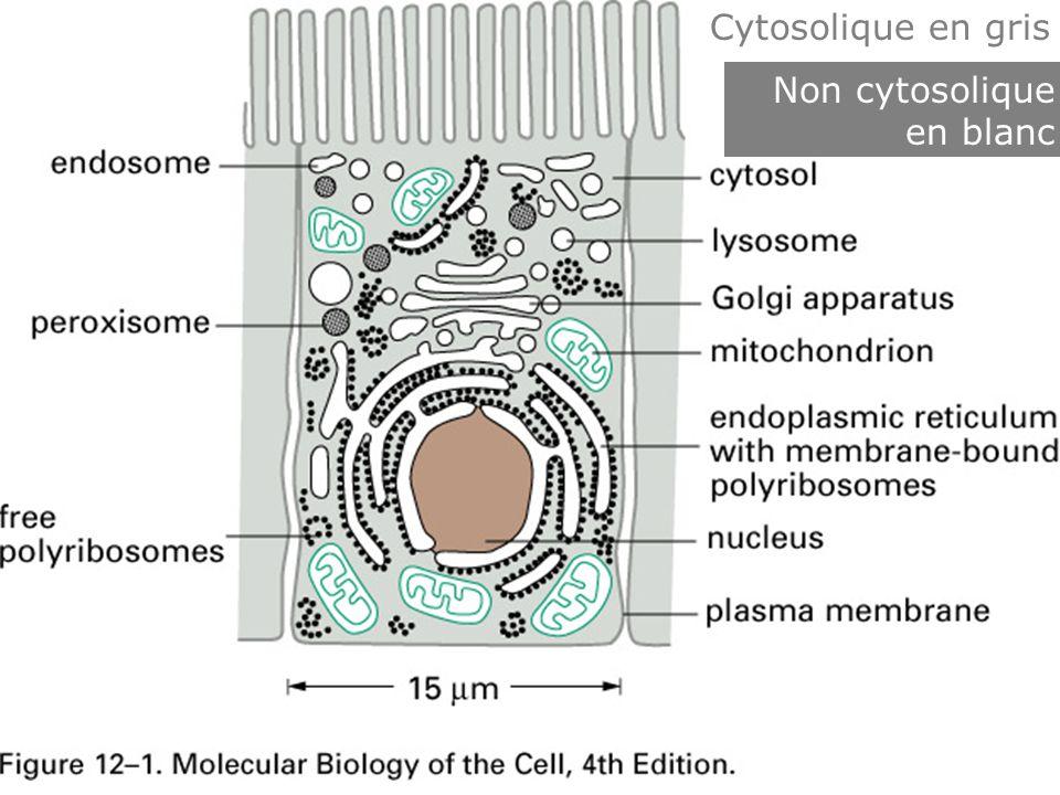 8 Fig 12-1 Les compartiments Cytosolique en gris Non cytosolique en blanc