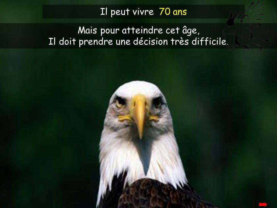 L'aigle vit plus longtemps que les autres oiseaux de son espèce.