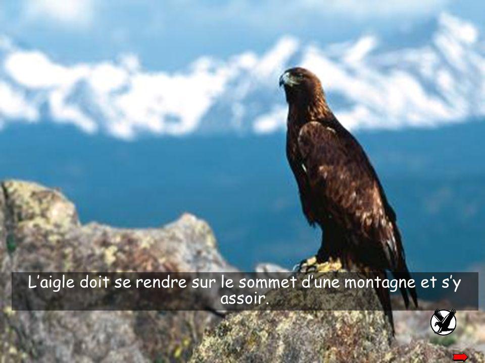L'aigle est alors confronté à deux choix: mourir ou entreprendre un long procédé de changements qui durera 150 jours.