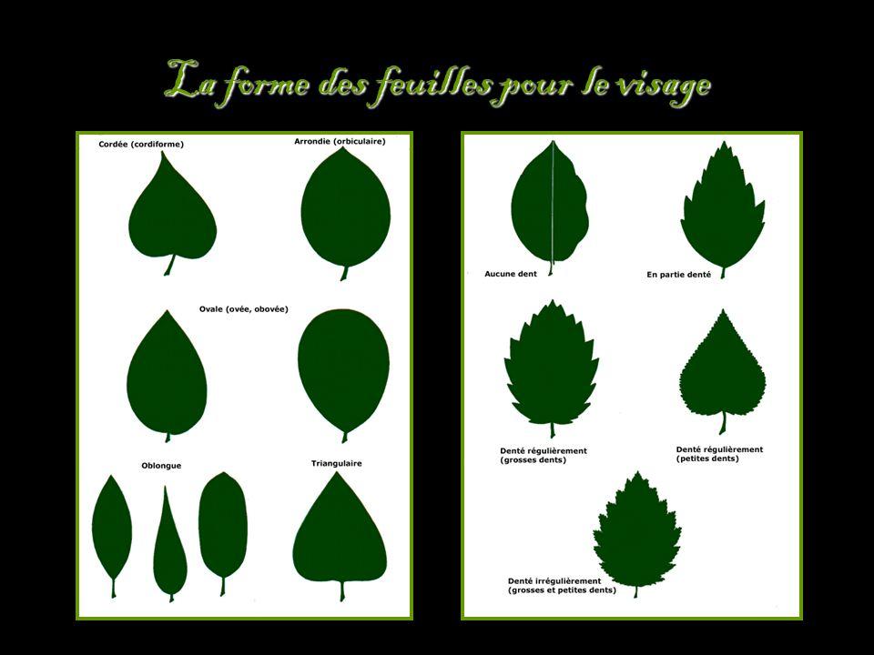La forme des feuilles pour le visage