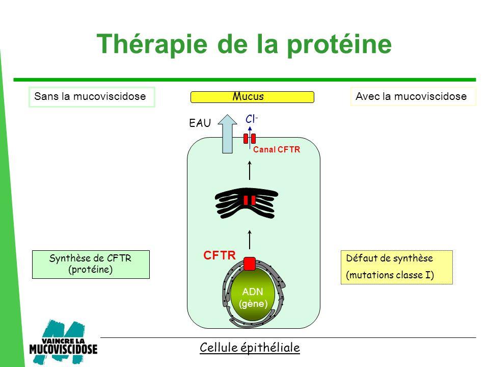 ................................ Défaut de synthèse (mutations classe I) Synthèse de CFTR (protéine) Cellule épithéliale CFTR ADN (gène) Mucus EAU Cl