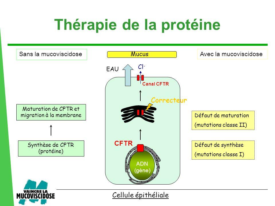 ................................ Défaut de synthèse (mutations classe I) Défaut de maturation (mutations classe II) Synthèse de CFTR (protéine) Cellul