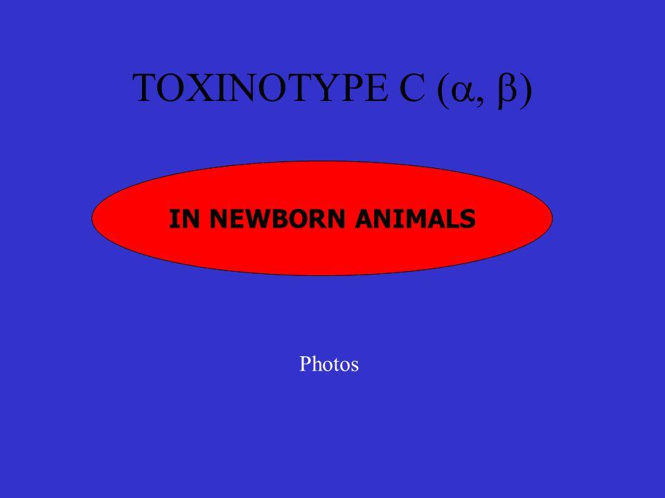 TOXINOTYPE C (  ) IN NEWBORN ANIMALS Photos
