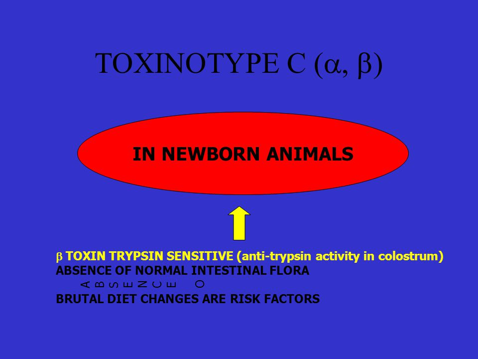 TOXINOTYPE C (  ) IN NEWBORN ANIMALS ABSENCE OABSENCE O  TOXIN TRYPSIN SENSITIVE (anti-trypsin activity in colostrum) ABSENCE OF NORMAL INTESTINAL FLORA BRUTAL DIET CHANGES ARE RISK FACTORS