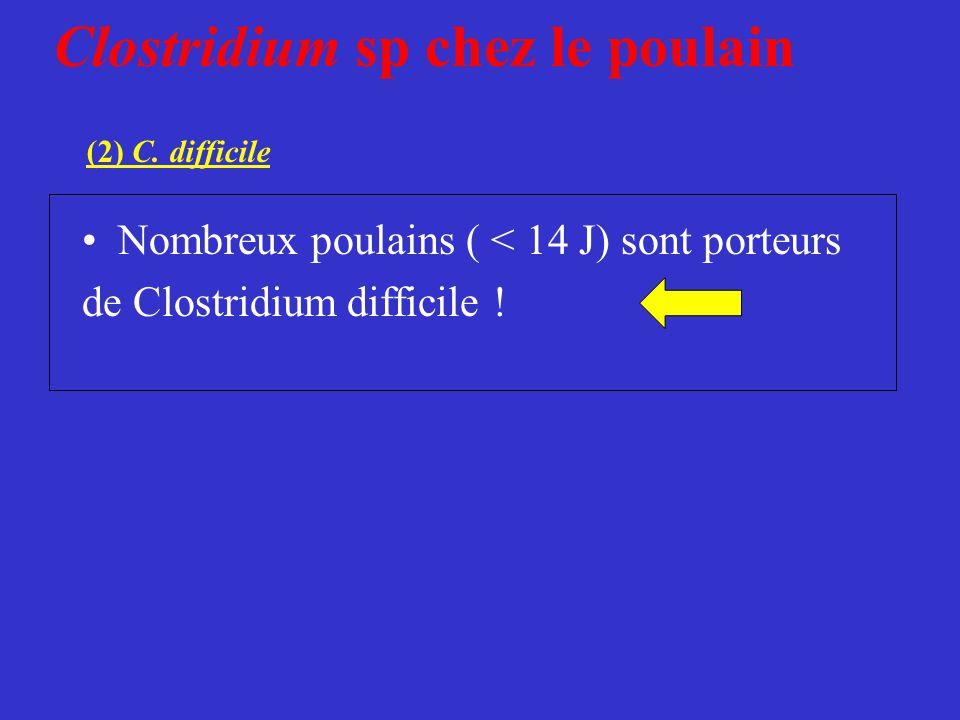 Clostridium sp chez le poulain (2) C. difficile •Nombreux poulains ( < 14 J) sont porteurs de Clostridium difficile !