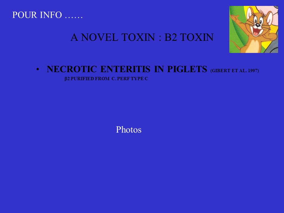 A NOVEL TOXIN : B2 TOXIN •NECROTIC ENTERITIS IN PIGLETS (GIBERT ET AL.