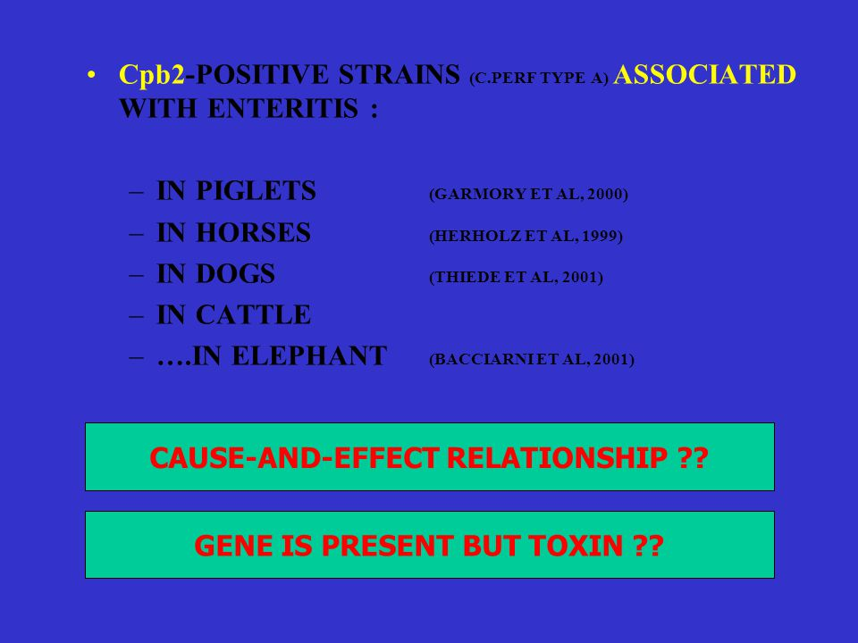 •Cpb2-POSITIVE STRAINS (C.PERF TYPE A) ASSOCIATED WITH ENTERITIS : –IN PIGLETS (GARMORY ET AL, 2000) –IN HORSES (HERHOLZ ET AL, 1999) –IN DOGS (THIEDE ET AL, 2001) –IN CATTLE –….IN ELEPHANT (BACCIARNI ET AL, 2001) CAUSE-AND-EFFECT RELATIONSHIP ?.