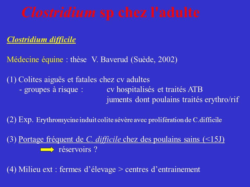 Clostridium sp chez l'adulte Clostridium difficile Médecine équine : thèse V. Baverud (Suède, 2002) (1) Colites aiguës et fatales chez cv adultes - gr