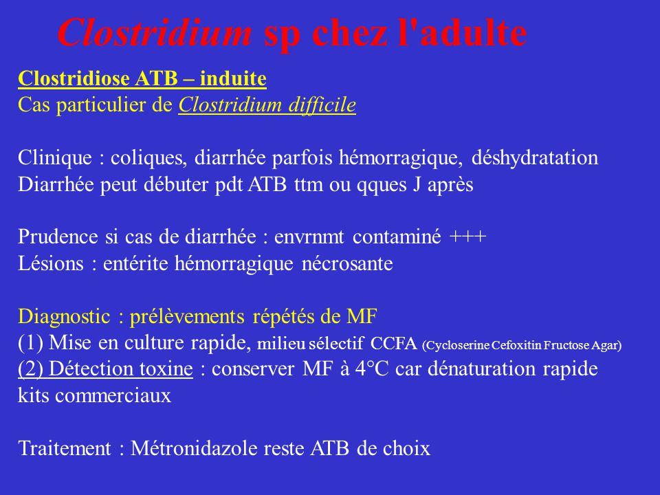 Clostridium sp chez l'adulte Clostridiose ATB – induite Cas particulier de Clostridium difficile Clinique : coliques, diarrhée parfois hémorragique, d