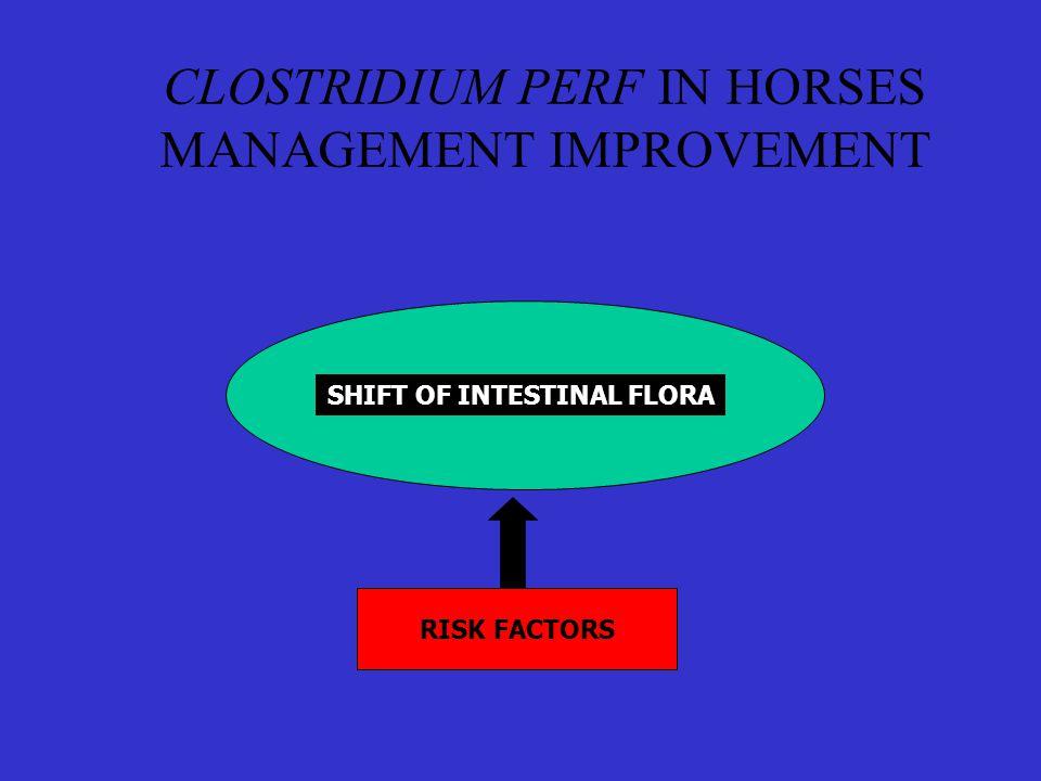 CLOSTRIDIUM PERF IN HORSES MANAGEMENT IMPROVEMENT SHIFT OF INTESTINAL FLORA RISK FACTORS