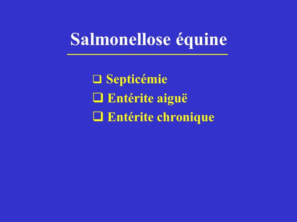 Salmonellose équine  Septicémie  Entérite aiguë  Entérite chronique