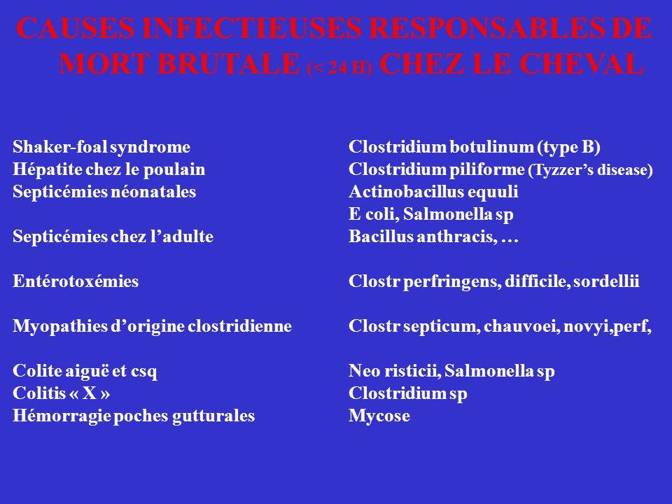 CAUSES INFECTIEUSES RESPONSABLES DE MORT BRUTALE (< 24 H) CHEZ LE CHEVAL Shaker-foal syndromeClostridium botulinum (type B) Hépatite chez le poulainCl