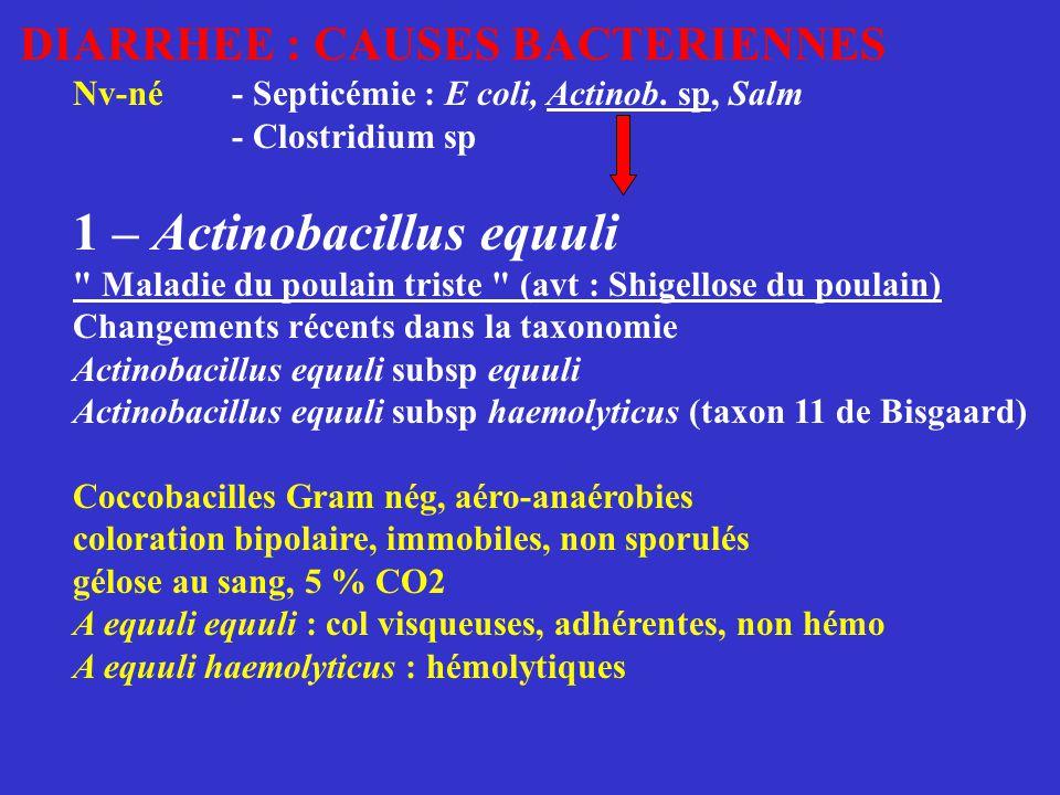 1 - Lawsonia intracellularis (pour information) Bacille Gram nég, acido-résistant, non sporulé cultivable sur cellules intestinales de rat in vivo, dans le cytoplasme apical des entérocytes responsable des entérites prolifératives du porc décrit également chez le cheval Diagnostic : - Histopathologie : coloration de Warthin-Starry - Immunofluorescence et PCR (muqueuse iléon)