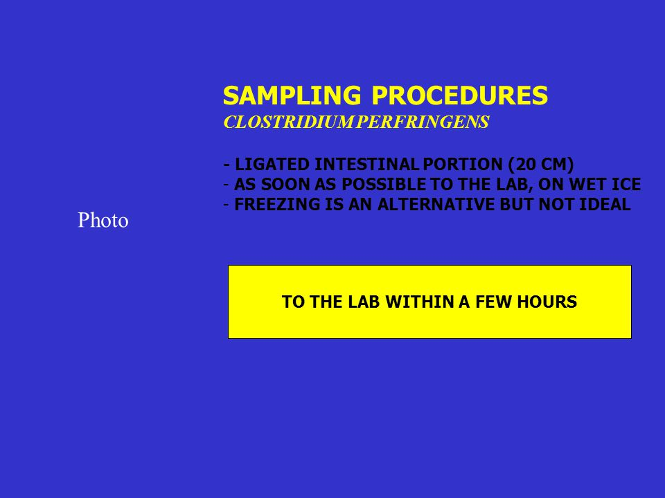 SAMPLING PROCEDURES CLOSTRIDIUM PERFRINGENS - LIGATED INTESTINAL PORTION (20 CM) - AS SOON AS POSSIBLE TO THE LAB, ON WET ICE - FREEZING IS AN ALTERNA