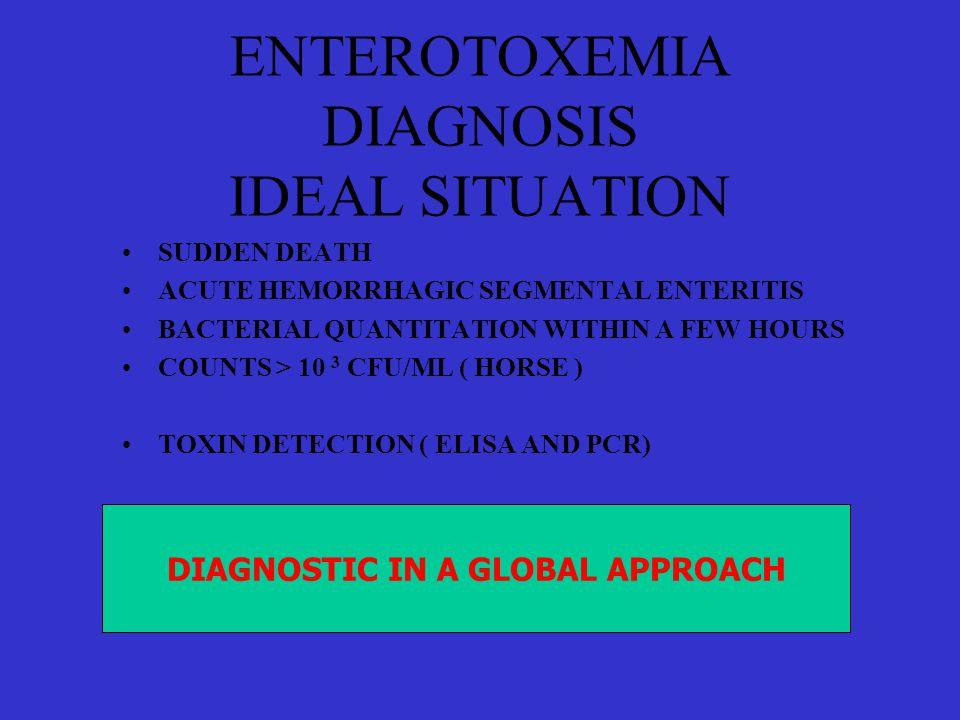 ENTEROTOXEMIA DIAGNOSIS IDEAL SITUATION •SUDDEN DEATH •ACUTE HEMORRHAGIC SEGMENTAL ENTERITIS •BACTERIAL QUANTITATION WITHIN A FEW HOURS •COUNTS > 10 3