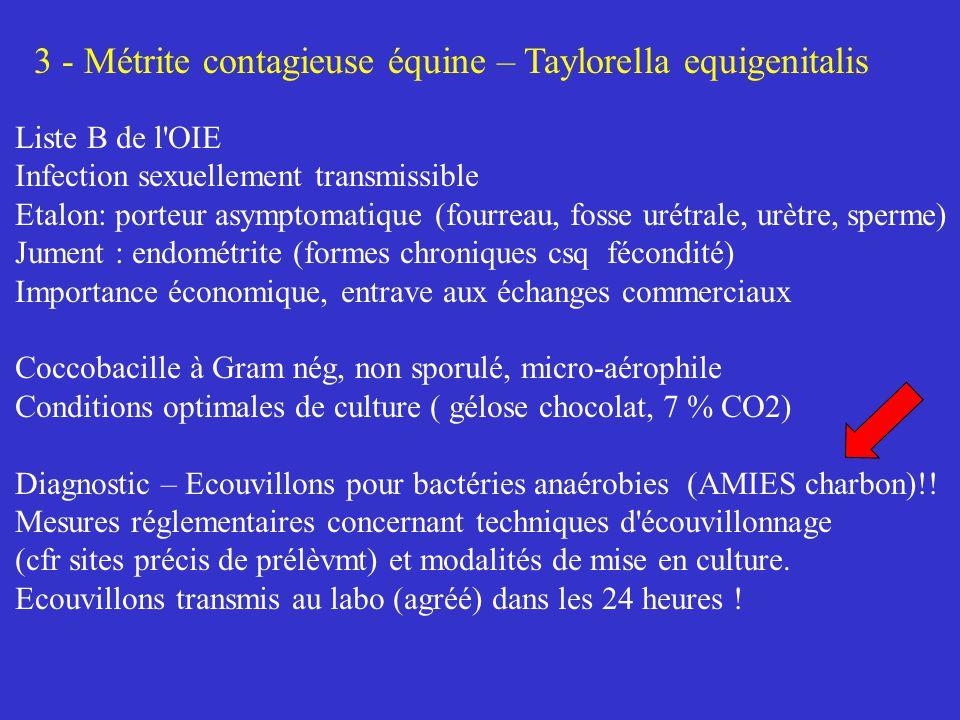 3 - Métrite contagieuse équine – Taylorella equigenitalis Liste B de l'OIE Infection sexuellement transmissible Etalon: porteur asymptomatique (fourre