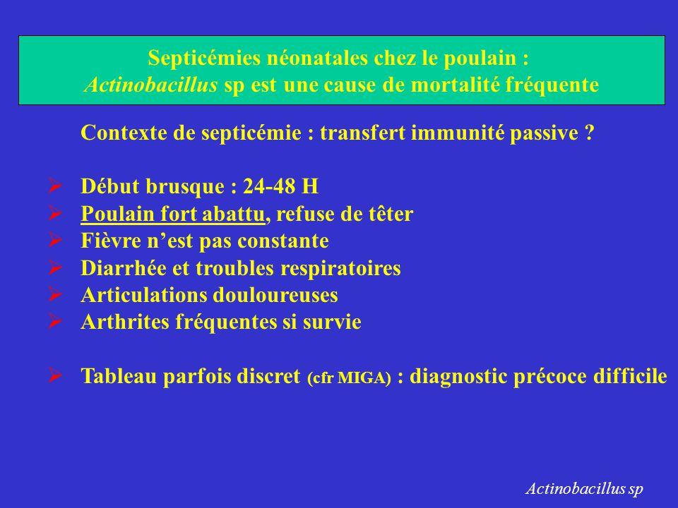 Contexte de septicémie : transfert immunité passive ?  Début brusque : 24-48 H  Poulain fort abattu, refuse de têter  Fièvre n'est pas constante 