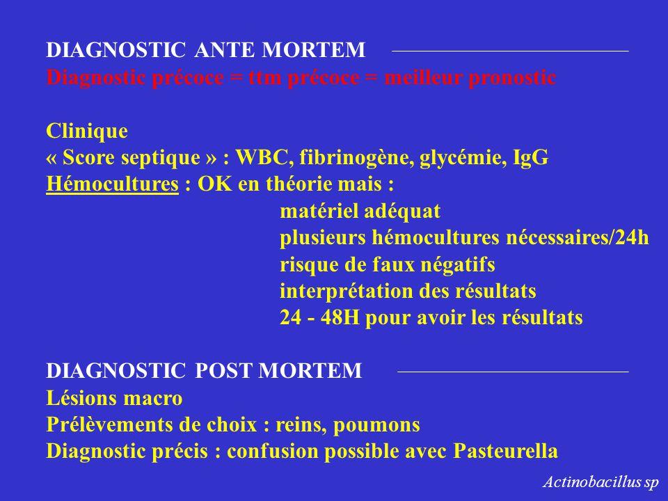 DIAGNOSTIC ANTE MORTEM Diagnostic précoce = ttm précoce = meilleur pronostic Clinique « Score septique » : WBC, fibrinogène, glycémie, IgG Hémoculture