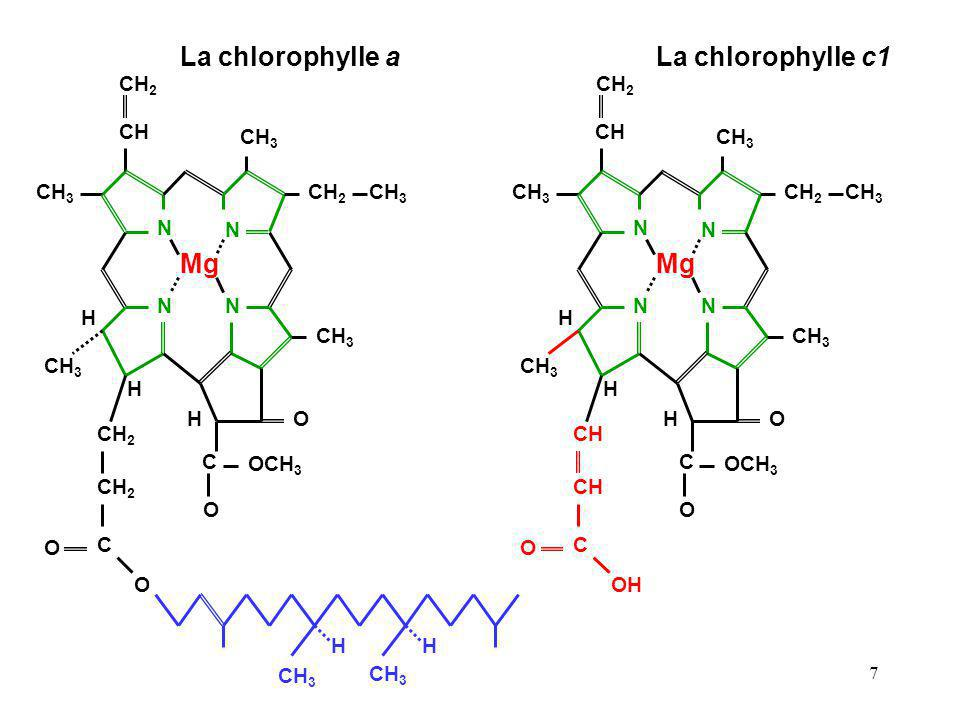 7 La chlorophylle aLa chlorophylle c1 CH 2 CH CH 3 N N CH 2 CH 3 NN H Mg O C OCH 3 O H H CH C O OH