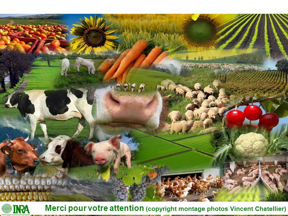 Régulation des marchés agricoles, gestion des risques et des crises26 Merci pour votre attention (copyright montage photos Vincent Chatellier)