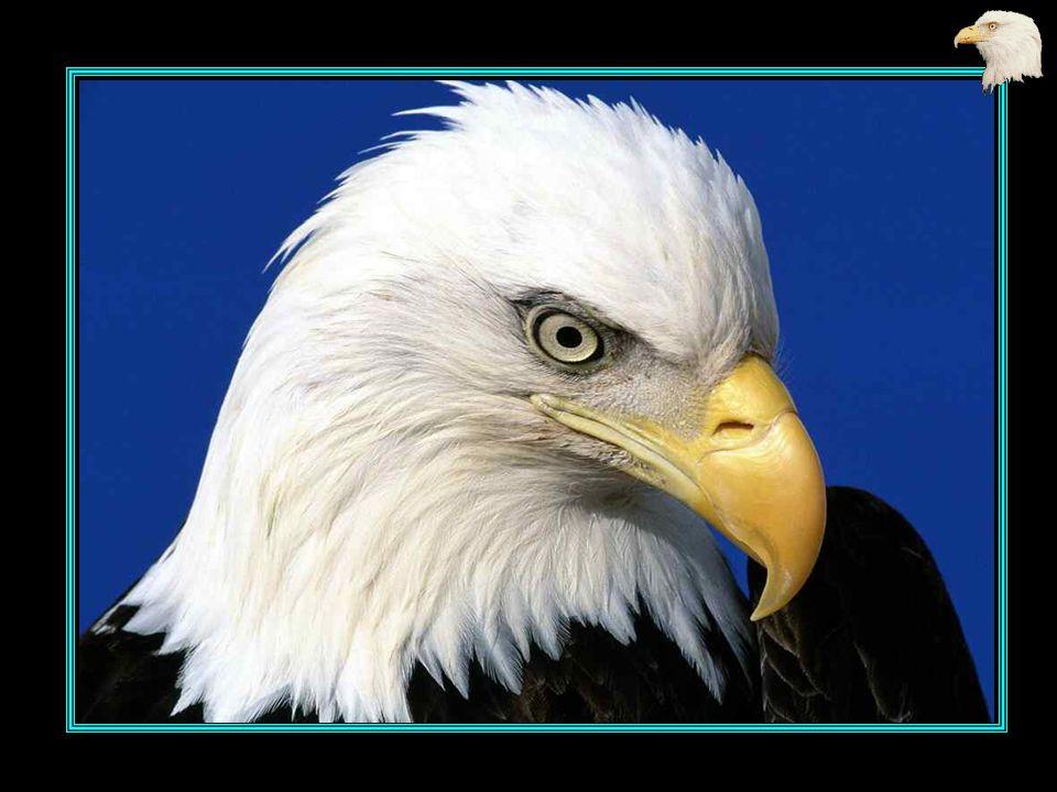 L aigle noir dans un bruissement d ailes, Prit son vol pour regagner le ciel,
