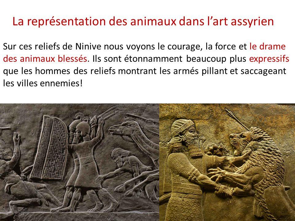 Sur ces reliefs de Ninive nous voyons le courage, la force et le drame des animaux blessés. Ils sont étonnamment beaucoup plus expressifs que les homm