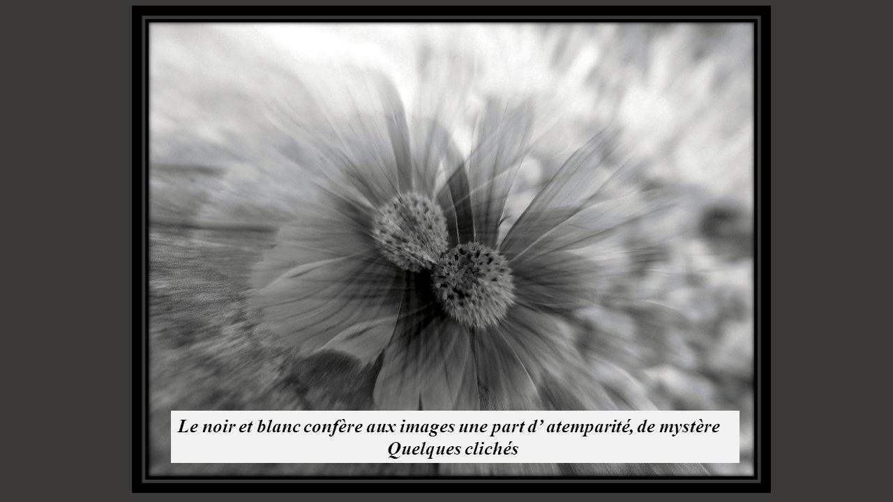 Le noir et blanc confère aux images une part d' atemparité, de mystère Quelques clichés