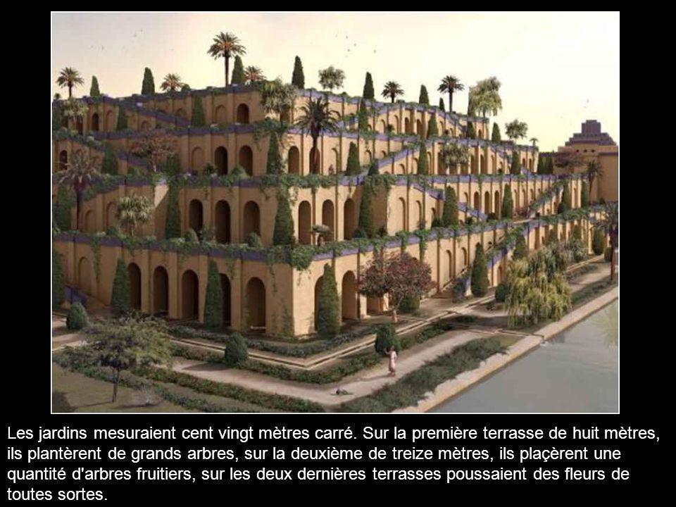 Selon la tradition, le roi Nabuchodonosor II (604-562 avant J-C) aurait fait construire pour son épouse Amytis, les célèbres jardins suspendus de Baby