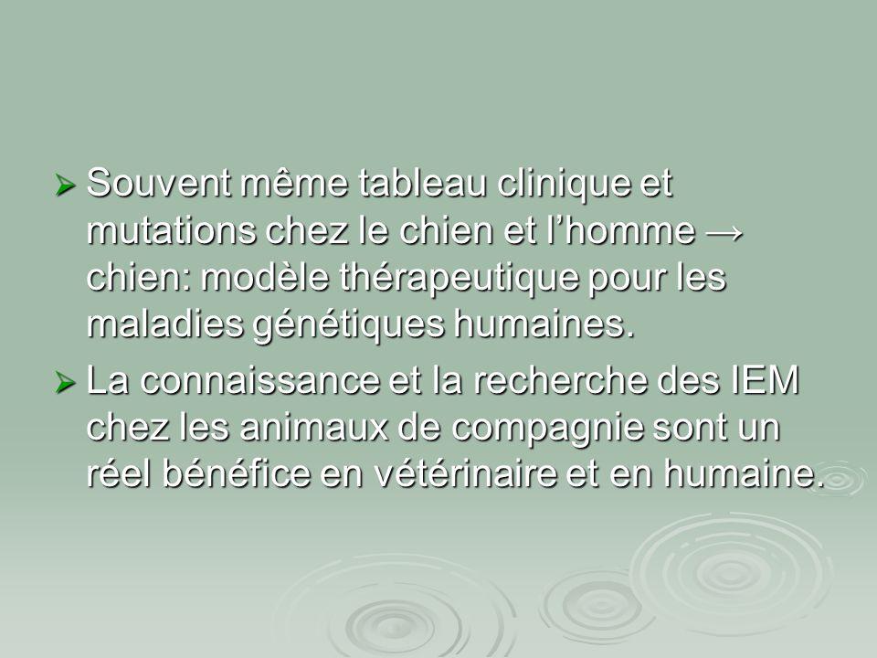  Souvent même tableau clinique et mutations chez le chien et l'homme → chien: modèle thérapeutique pour les maladies génétiques humaines.  La connai