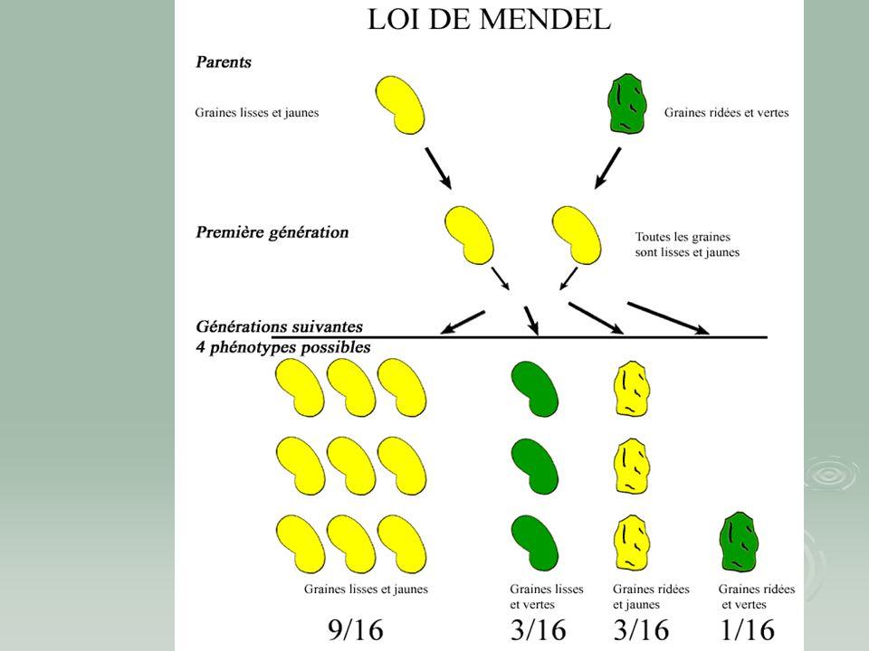 Objectifs  Sensibilisation de l'existence d'IEM chez les animaux de compagnie  Comparaison avec les maladies métaboliques héréditaires néonatales humaines  Comment reconnaître les IEM  Comment diagnostiquer une IEM  Comment comprendre le blocage enzymatique  Modèle animal pour maladies humaines