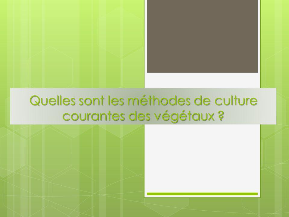 Quelles sont les méthodes de culture courantes des végétaux ?