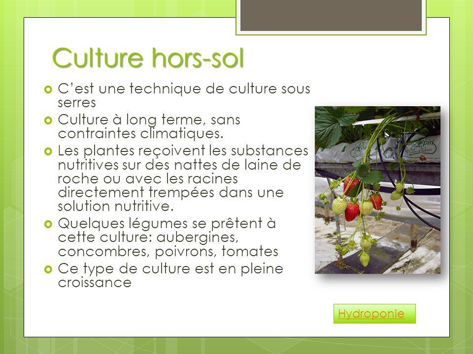 Culture hors-sol  C'est une technique de culture sous serres  Culture à long terme, sans contraintes climatiques.  Les plantes reçoivent les substa