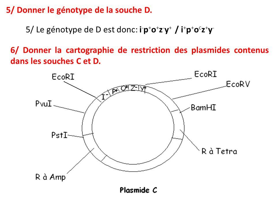 5/ Le génotype de D est donc: i - p + o + z - y + / i + p + o c z + y - 5/ Donner le génotype de la souche D. 6/ Donner la cartographie de restriction