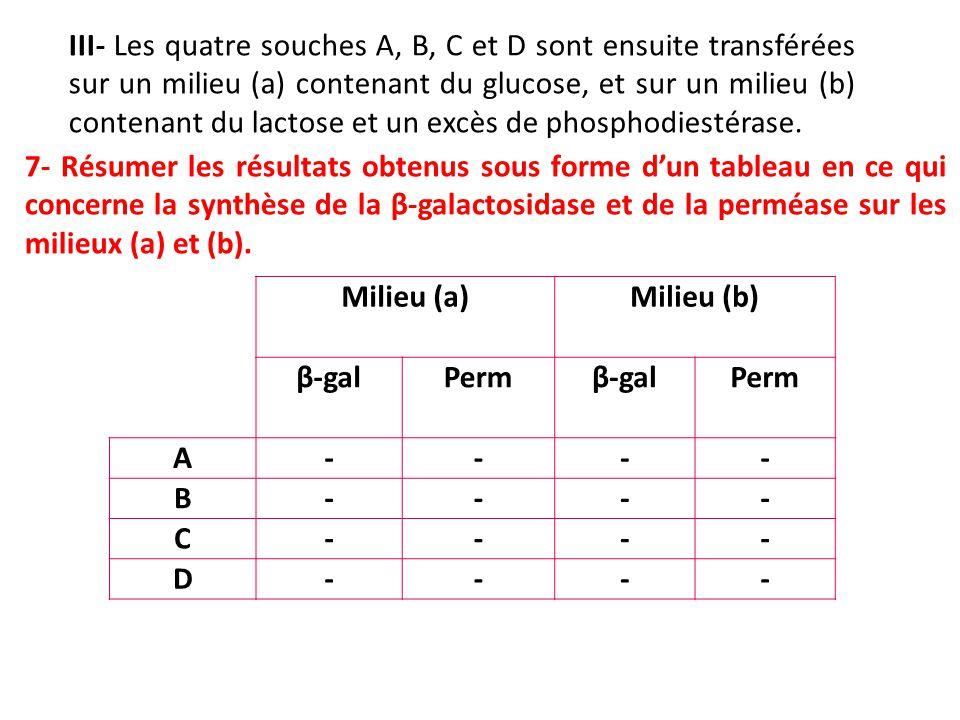 III- Les quatre souches A, B, C et D sont ensuite transférées sur un milieu (a) contenant du glucose, et sur un milieu (b) contenant du lactose et un