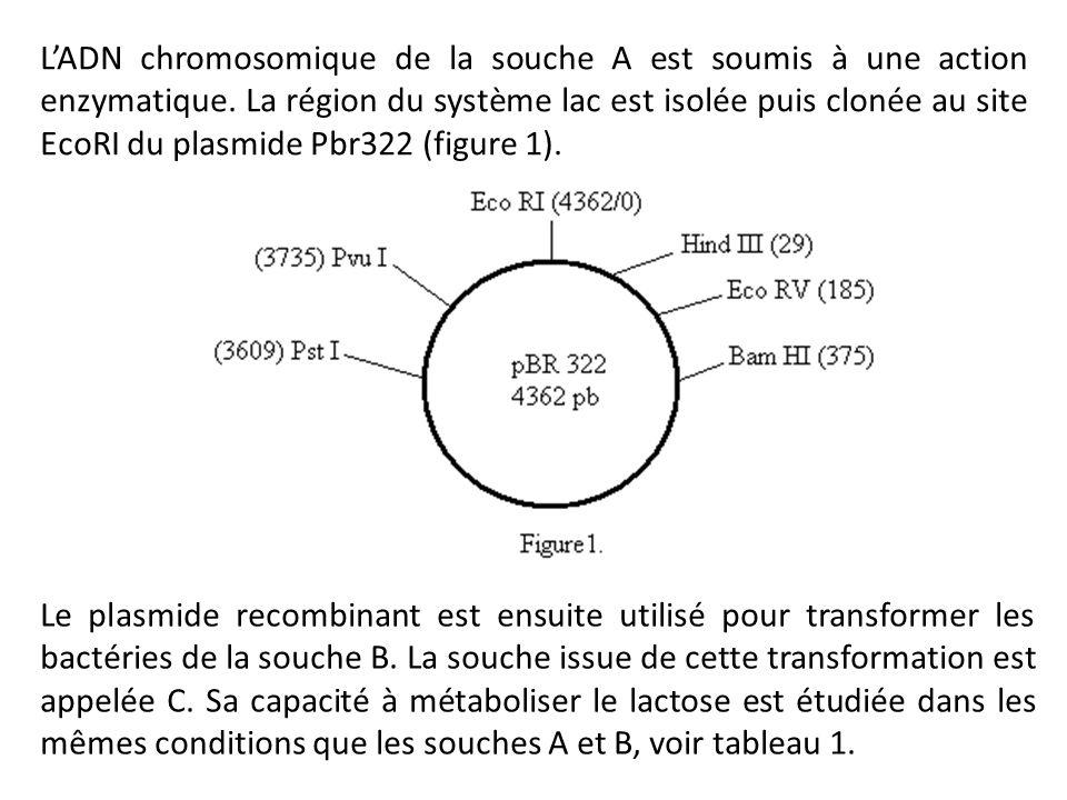 L'ADN chromosomique de la souche A est soumis à une action enzymatique. La région du système lac est isolée puis clonée au site EcoRI du plasmide Pbr3